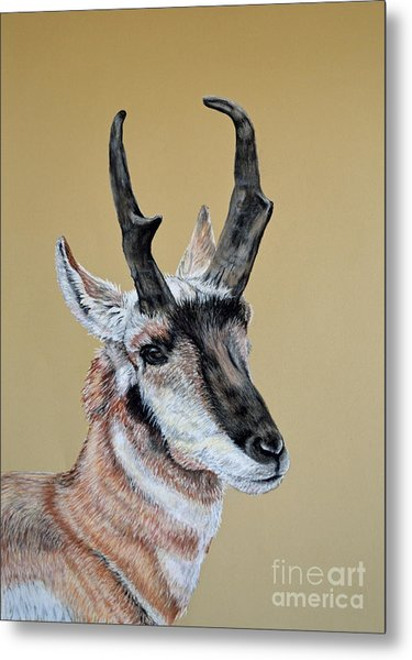 Colorado Plains Antelope Metal Print by Ann Marie Chaffin