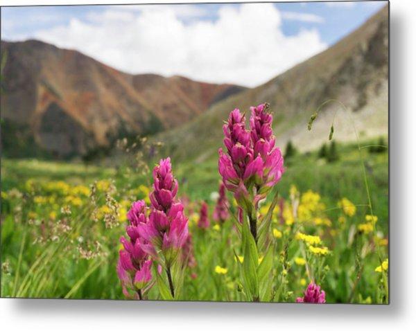 Colorado Wildflowers In The Backcountry Metal Print