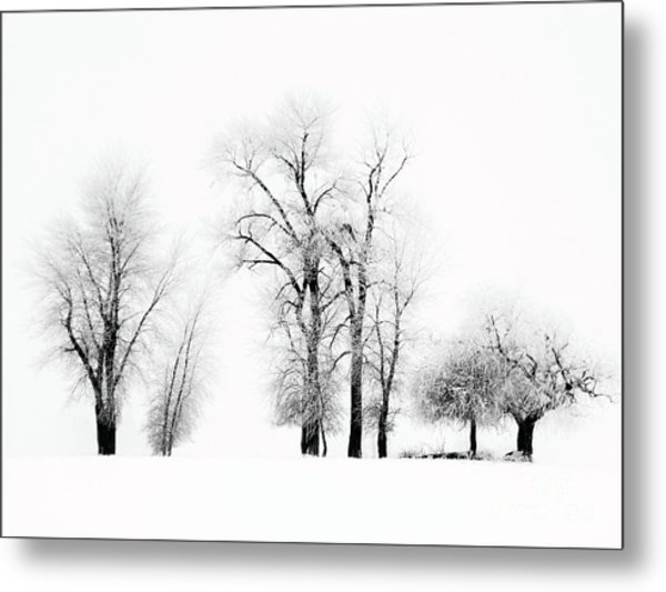 Frosted Trees 2 Metal Print