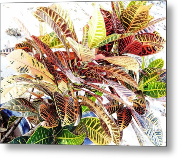 Colorful - Croton - Plant Metal Print