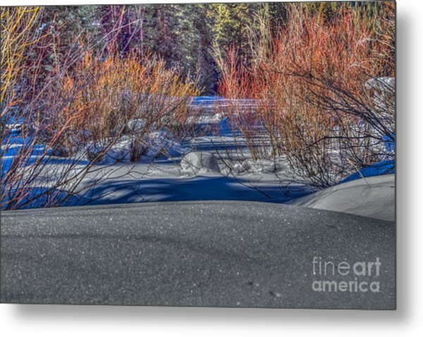 Colorful Despite Snow Metal Print