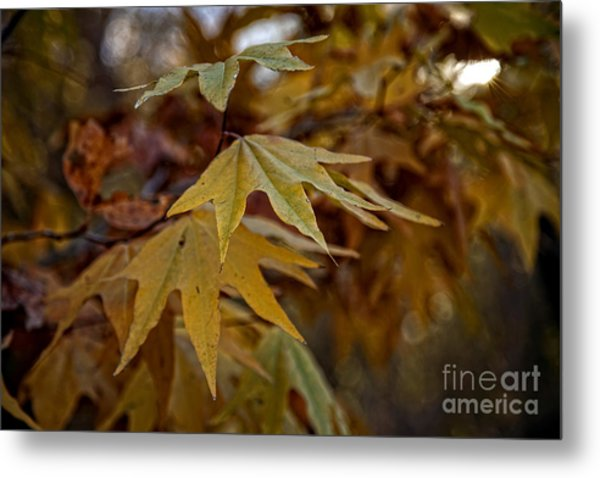 Colorful Fall Foliage In The Verde Canyon Arizona Metal Print