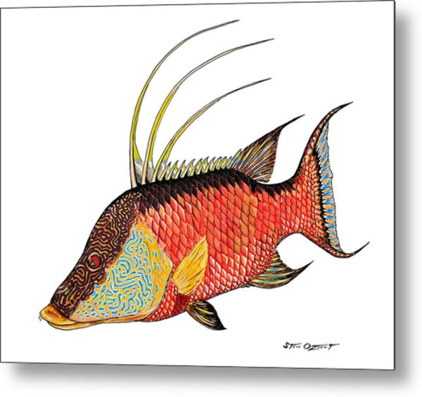 Metal Print featuring the painting Colorful Hogfish by Steve Ozment