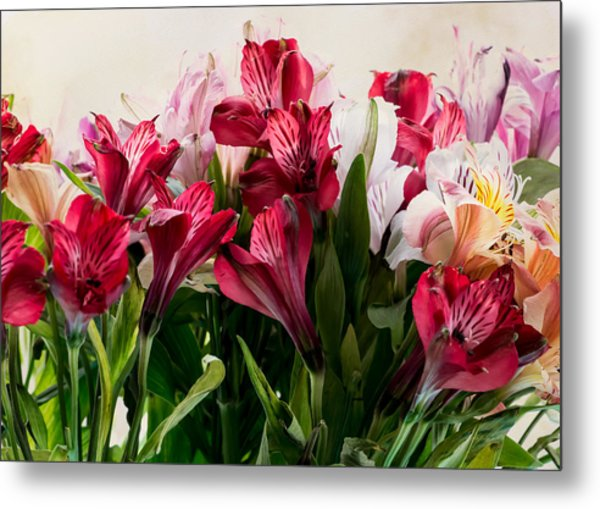 Colorful Peruvian Lillys Metal Print