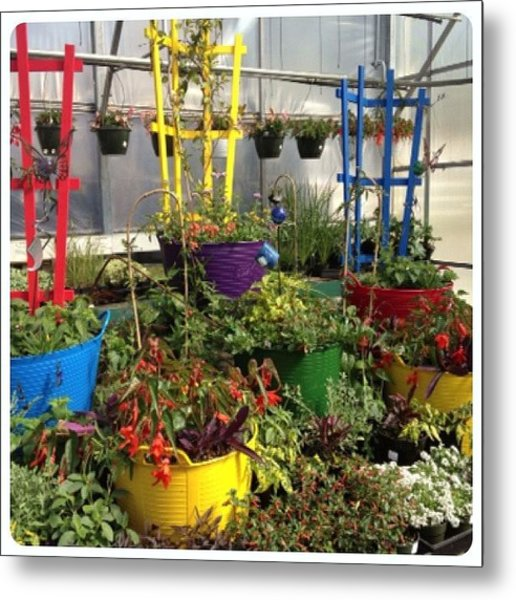 Colorful Planters For Climbers! Metal Print