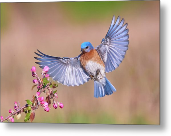 Colorful Spring Metal Print by Jim Luo