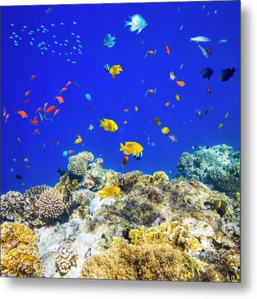 Colorful Tropical Fish On Red Sea Metal Print by Cinoby