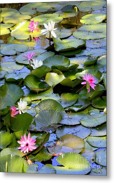 Colorful Water Lily Pond Metal Print