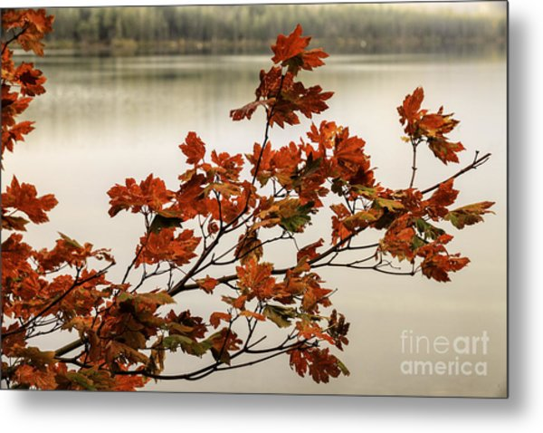 Colors Of Autumn Metal Print