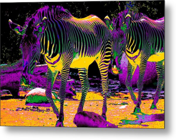 Colourful Zebras  Metal Print