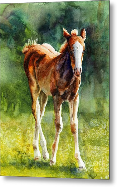 Colt In Green Pastures Metal Print