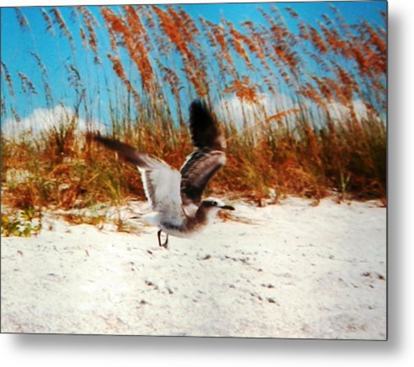 Windy Seagull Landing Metal Print