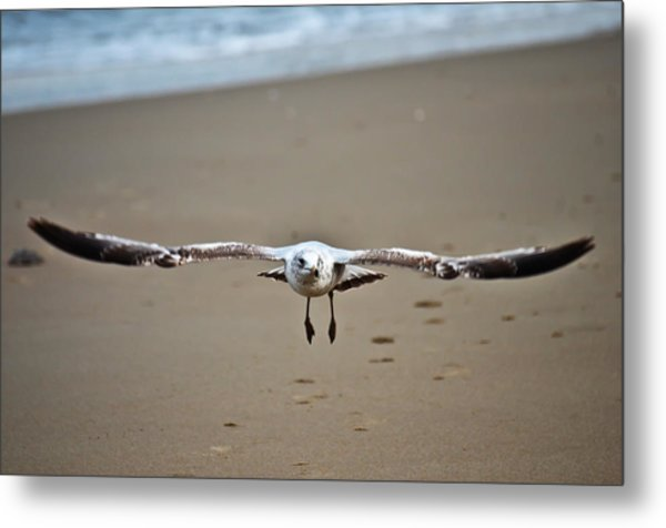 Coming In For A Landing  Metal Print by Sabrina  Hall