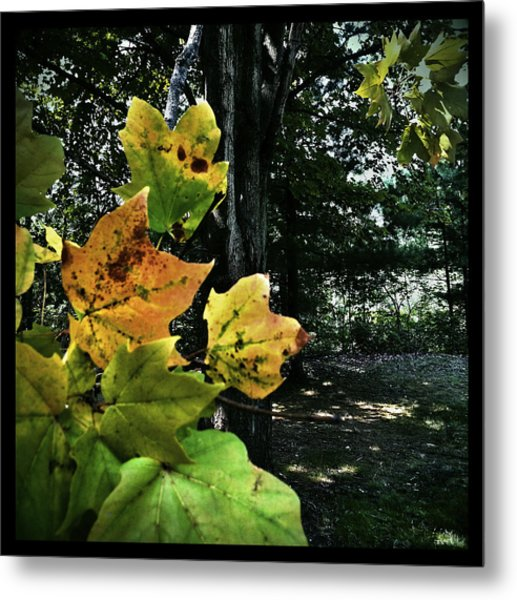 Coming Of Fall Metal Print