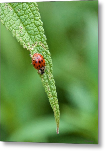 Coming To The End Of The Leaf Metal Print