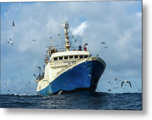 Commercial Purse-sein Trawler Metal Print by Peter Chadwick