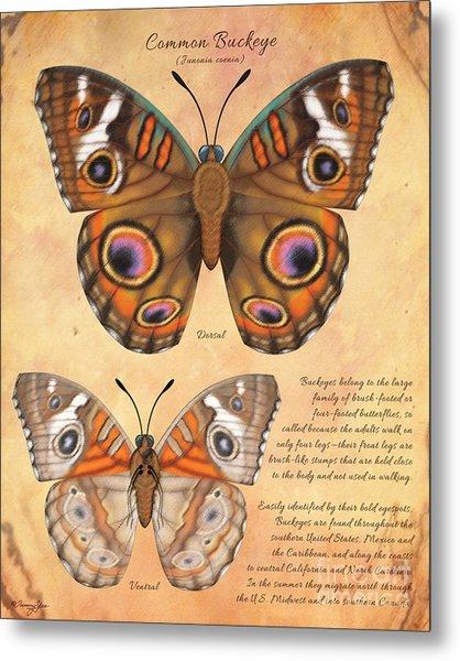 Common Buckeye Butterfly  Metal Print by Tammy Yee
