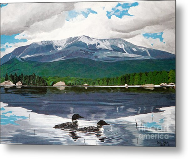 Common Loon On Togue Pond By Mount Katahdin Metal Print