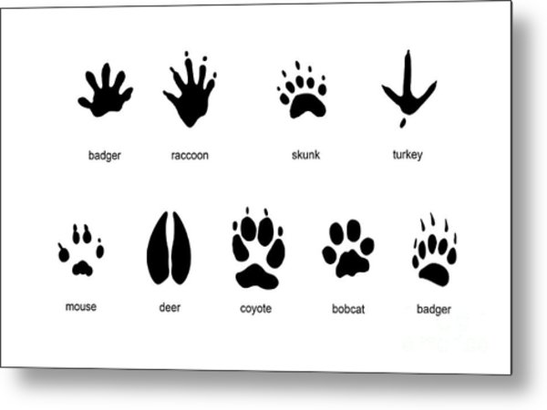 Common Mammal Animal Tracks Metal Print