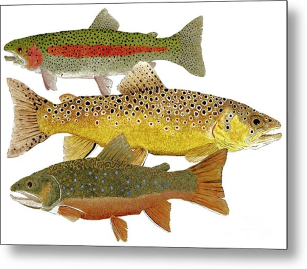 Common Trout  Rainbow Brown And Brook Metal Print