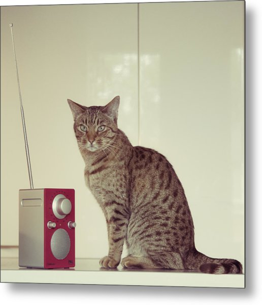 Concentrated Listener Metal Print