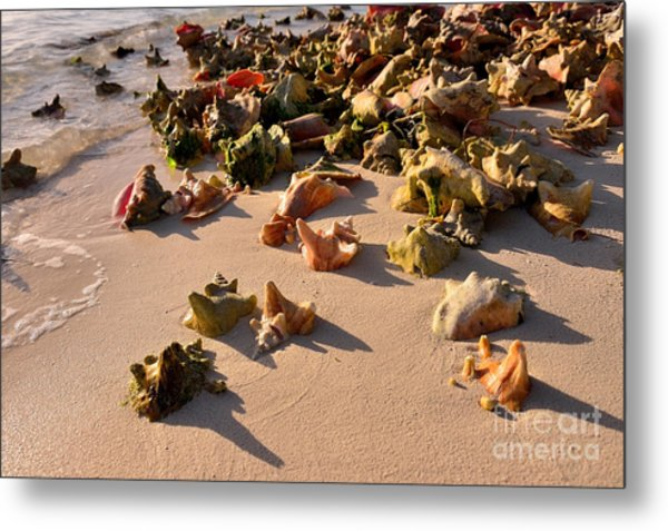 Conch Collection Metal Print