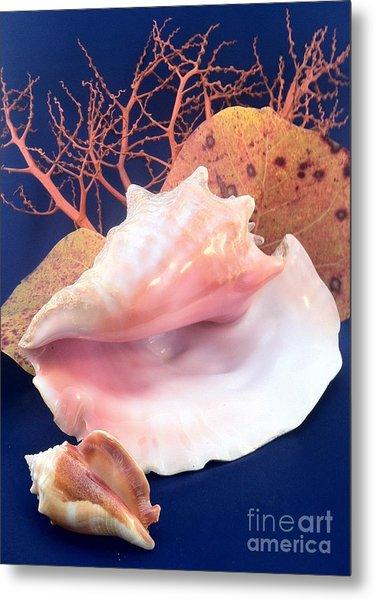 Conch Still Life Metal Print