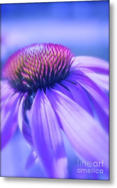 Cone Flower In Pastels  Metal Print