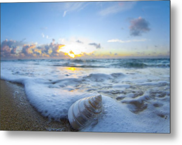 Cone Shell Foam Metal Print