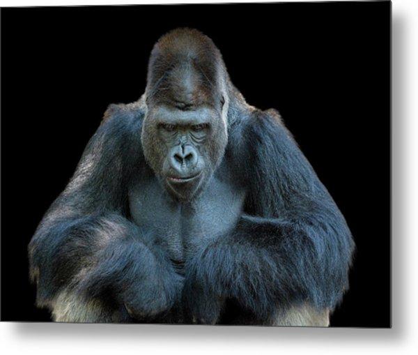 Contemplative Gorilla Metal Print