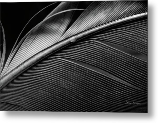 Contour Feather Metal Print