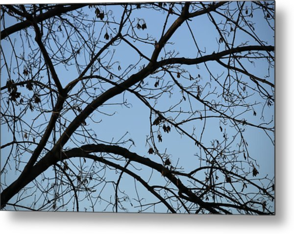 Contrasting Forms In Nature Metal Print by Stacie  Goodloe