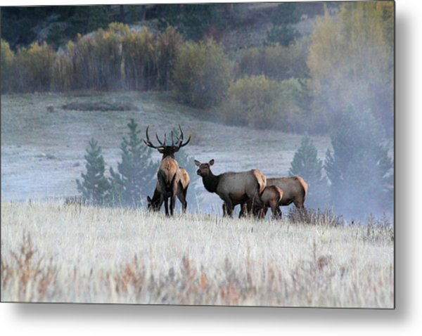 Cool Misty Morning Metal Print