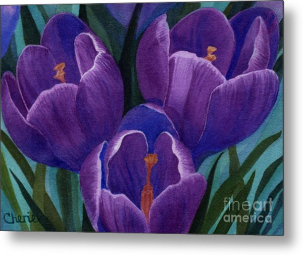 Cool Purple Crocus Metal Print by Vikki Wicks