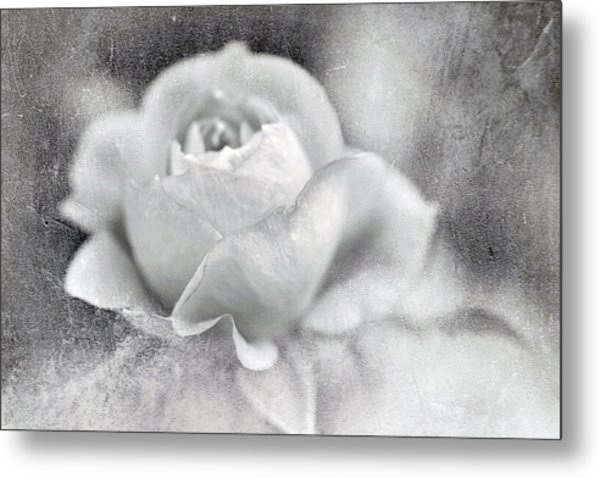 Cool Rose Metal Print