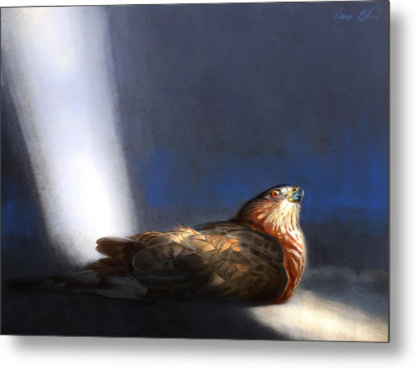Coopers Hawk Metal Print