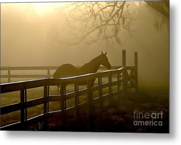 Coosaw Early Morning Mist Metal Print