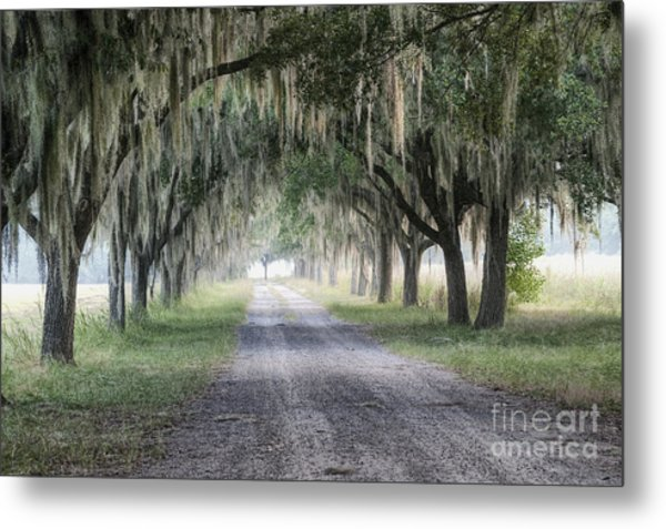 Coosaw Fog Avenue Of Oaks Metal Print