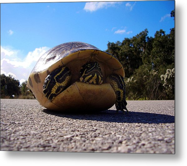 Cooter Turtle Metal Print