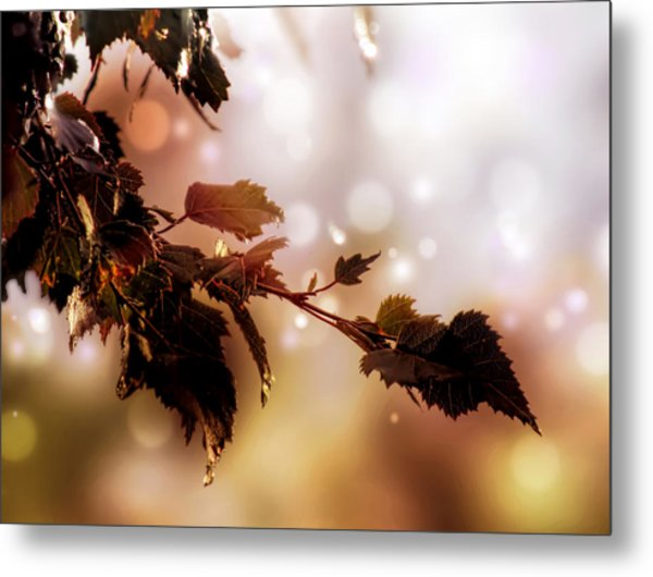 Copper Birch Metal Print