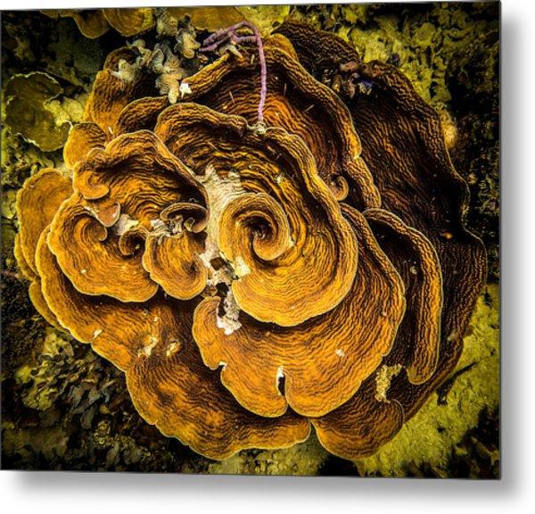 Coral Farming Metal Print