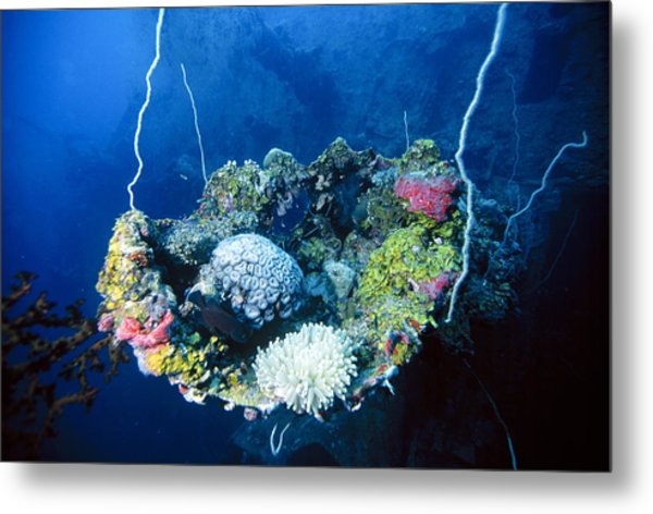 Corals On Ship Wreck Metal Print