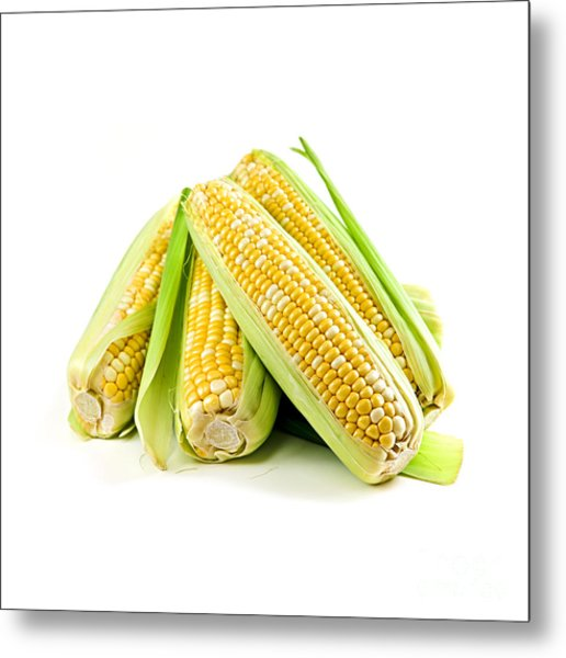 Corn Ears On White Background Metal Print