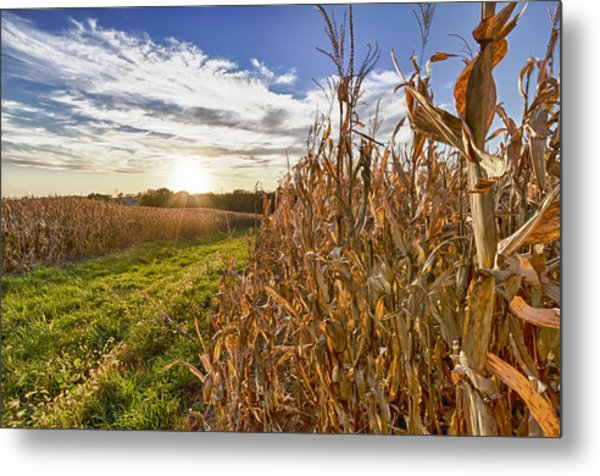 Cornfield At Sunset Metal Print