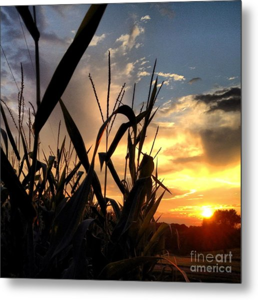 Cornfield Sundown Metal Print
