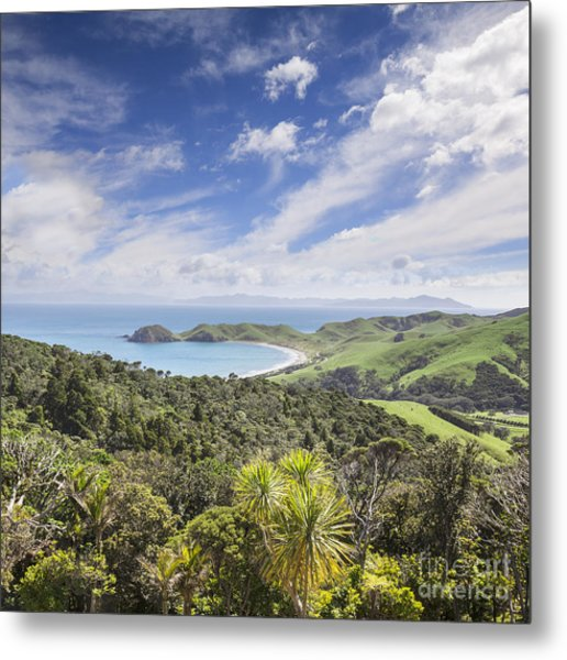 Coromandel Port Jackson New Zealand Metal Print