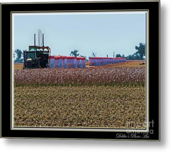 Cotton Harvest Metal Print