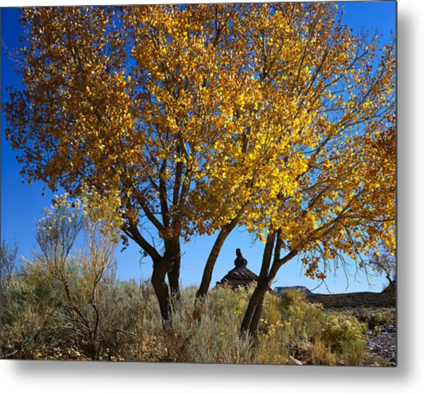 Cottonwood And Nipple Butte Metal Print