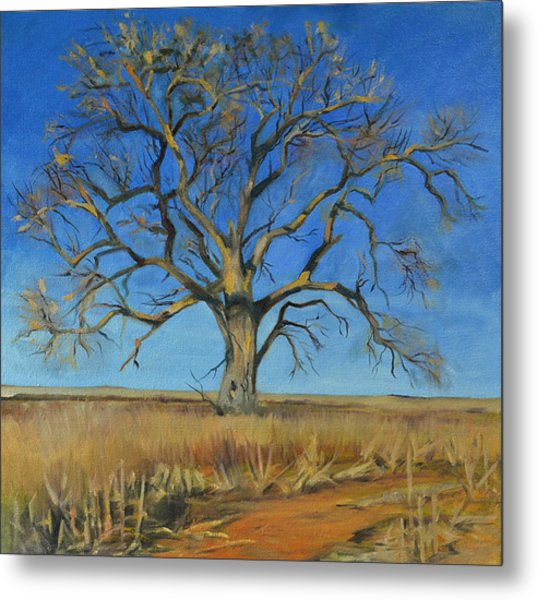 Cottonwood On The North 40 Metal Print