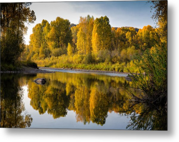 Cottonwoods On The Elk Metal Print